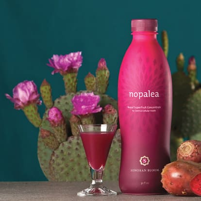 Nopalea Juice Chronic Inflammation